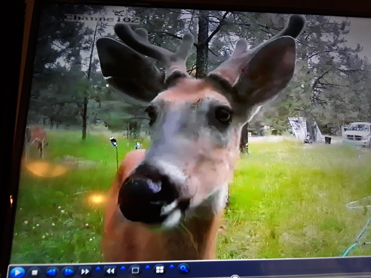 Wildlife Cams