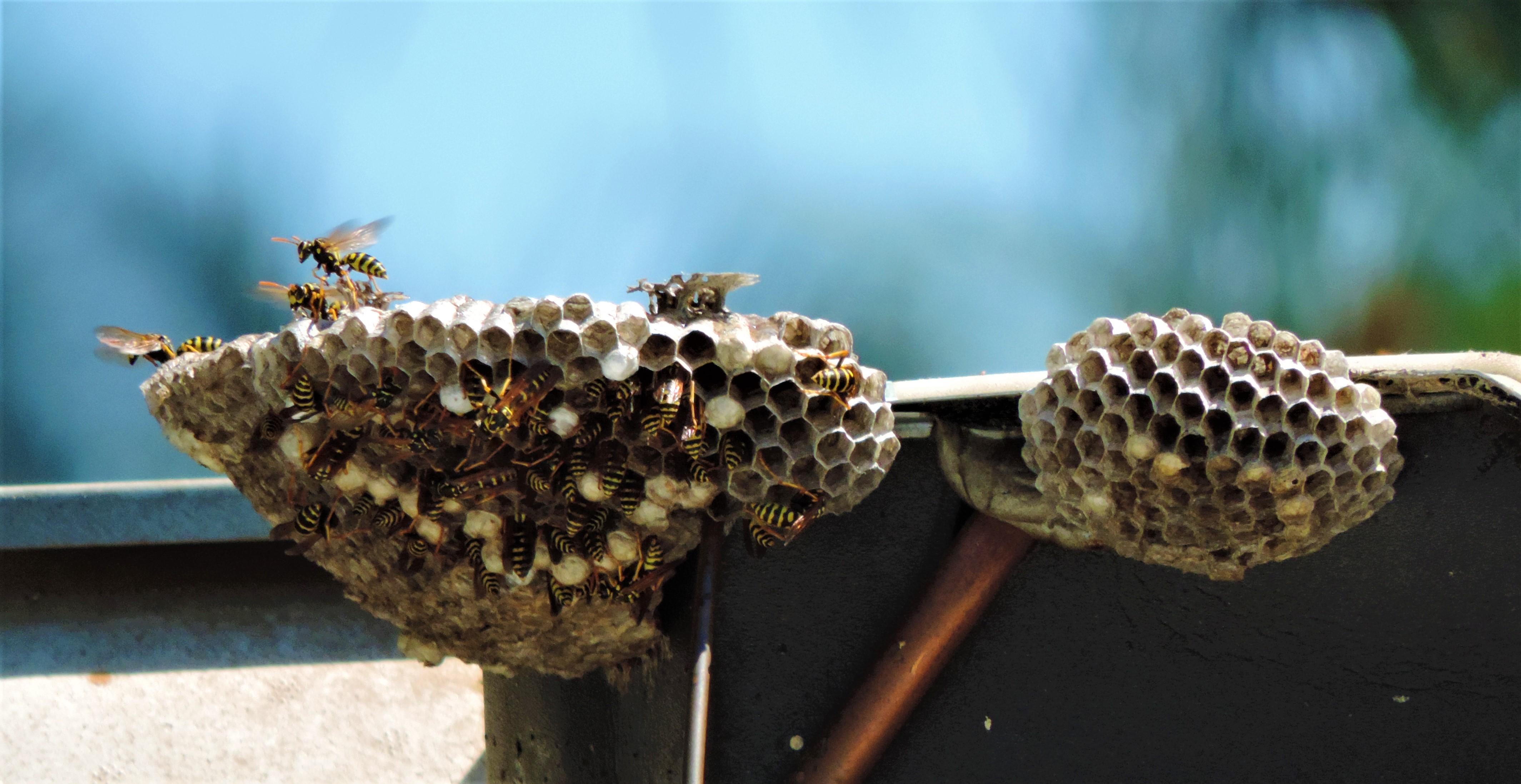 main hive