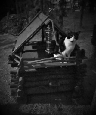 black and white cat cabin